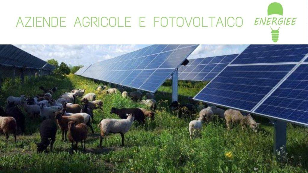AZIENDE AGRICOLE E FOTOVOLTAICO